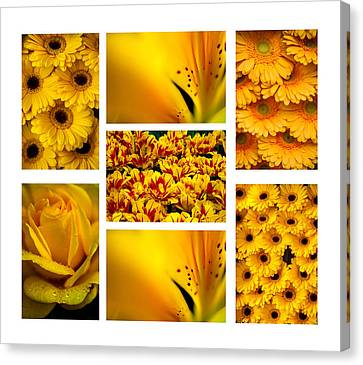 Yellow Flowers Collection. White. Polyptych Canvas Print by Jenny Rainbow