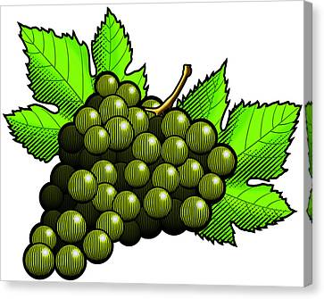 Green Grapes Canvas Print by Erasmo Hernandez