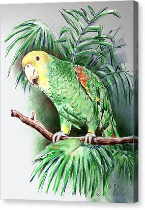 Yellow-headed Amazon Parrot Canvas Print by Arline Wagner