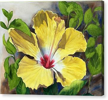 Yellow Hibiscus Canvas Print by Robert Thomaston