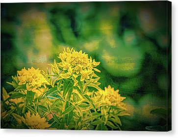 Yellow In Woods Canvas Print by Leif Sohlman