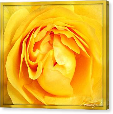 Yellow Petals Canvas Print by Cathie Tyler