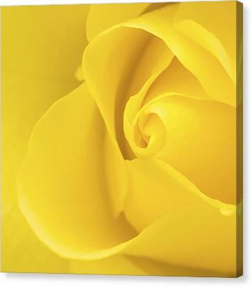 Yellow Rose Macro Canvas Print by Wim Lanclus