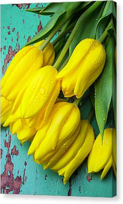 Yellow Spring Tulips Canvas Print by Garry Gay