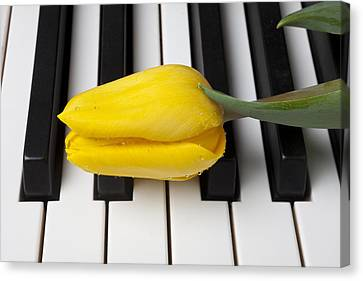 Yellow Tulip On Piano Keys Canvas Print by Garry Gay