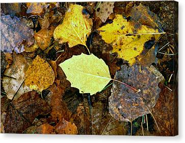 Yesterday's Memories Canvas Print by Bill Morgenstern