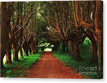 Yew Tree Lane At Killruddery House Canvas Print by Marcus Dagan
