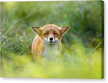 Yoda - Funny Fox II Canvas Print by Roeselien Raimond