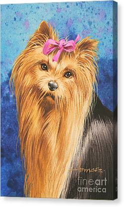 Yorkie Canvas Print by John Francis