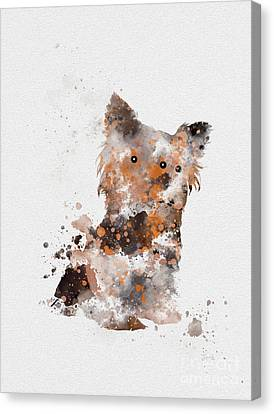 Yorkshire Terrier Canvas Print by Rebecca Jenkins