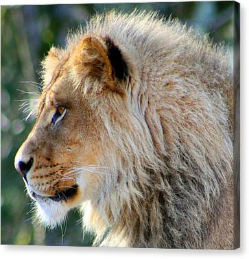Young King Close Up Canvas Print by Nick Gustafson