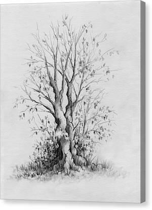Young Tree Canvas Print by Rachel Christine Nowicki