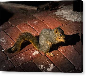 You're Nuts Canvas Print by Jamie Lindenmeier