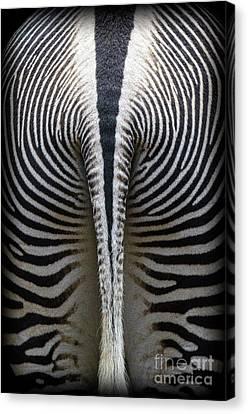 Zebra Stripes Canvas Print by Heiko Koehrer-Wagner