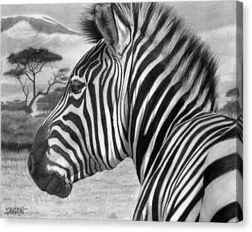 Zebra Canvas Print by Tim Dangaran