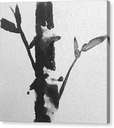 Zen Bamboo Canvas Print by Nick Young