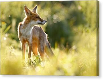 Zen Fox Series - Happy Fox Is Happy Canvas Print by Roeselien Raimond