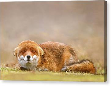 Zen Fox Series - Smiling Fox Is Smiling Canvas Print by Roeselien Raimond