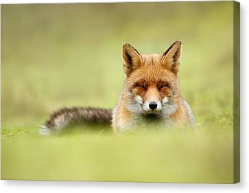 Zen Fox Series - Zen Fox In A Sea Of Green Canvas Print by Roeselien Raimond