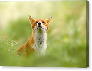Zen Fox Series - Zen Fox Does It Agian Canvas Print by Roeselien Raimond