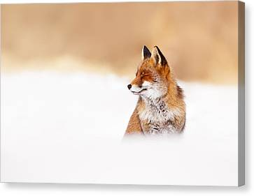 Zen Fox Series - Zen Fox In Winter Mood Canvas Print by Roeselien Raimond