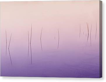 Zen Reeds  Canvas Print by Thomas Schoeller