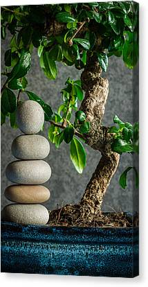 Zen Stones And Bonsai Tree II Canvas Print by Marco Oliveira