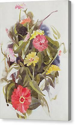 Zinnias Canvas Print by Charles Demuth