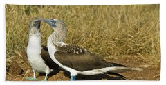 Blue-footed Booby Pair Hand Towel by William H. Mullins