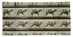 Camel Hand Towel by Eadweard Muybridge