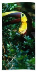 Chestnut-mandibled Toucan Hand Towel by Art Wolfe