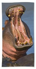 Close-up Of A Hippopotamus Yawning Hand Towel by Panoramic Images