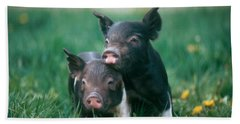 Domestic Piglets Hand Towel by Alan Carey