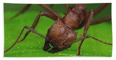 Leafcutter Ant Cutting Papaya Leaf Hand Towel by Mark Moffett