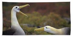 Waved Albatross Courtship Display Hand Towel by Tui De Roy