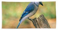 Blue Jay Hand Towel by Millard H. Sharp
