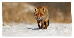 Red Fox In The Snow Hand Towel by Roeselien Raimond