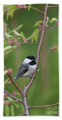 Black-capped Chickadee Poecile Hand Towel by Linda Freshwaters Arndt