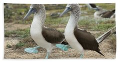 Blue-footed Booby Pair Courting Hand Towel by Tui De Roy
