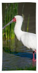 African Spoonbill Platalea Alba Hand Towel by Panoramic Images