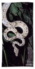 Amazon Tree Boa Hand Towel by James Brunker