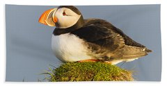 Atlantic Puffin Iceland Hand Towel by Peer von Wahl