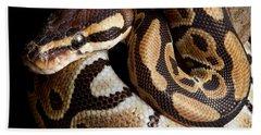 Ball Python Python Regius Hand Towel by David Kenny