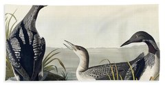 Black Throated Diver  Hand Towel by John James Audubon