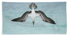 Blue-footed Booby Plunge Diving Hand Towel by Tui De Roy
