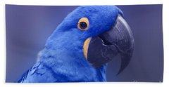 Blue Hyacinth Macaw - Anodorhynchus Hyacinthinus - Puohokamoa Hoolawa Maui Hawaii  Hand Towel by Sharon Mau