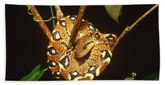 Boa Constrictor Hand Towel by Art Wolfe