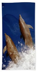 Bottlenose Dolphins Tursiops Truncatus Hand Towel by Anonymous