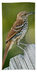 Brown Thrasher Hand Towel by Robert Frederick