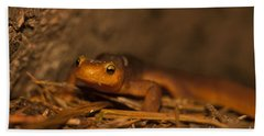 California Newt Hand Towel by Ron Sanford